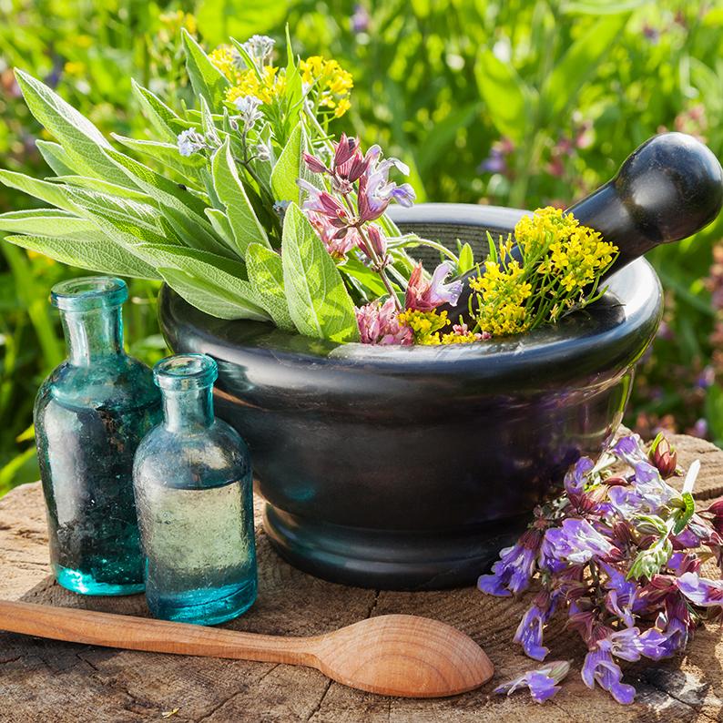 Verschiedene Kräuter und Heilpflanzen in einem Mörser, daneben Flaschen mit Tinkturen.